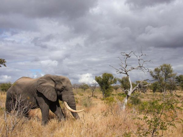kruger-national-park-safari-adventure-tours-and-trips-south-africa
