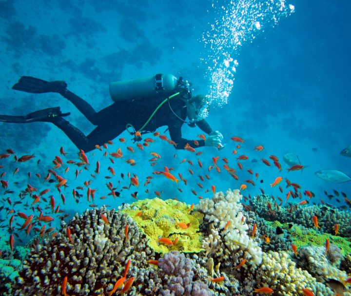 adventure tours scuba diving in south africa