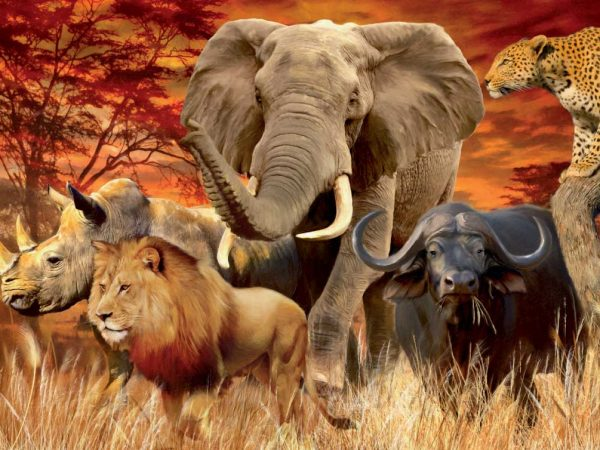 Adventure tours in johannesburg south africa