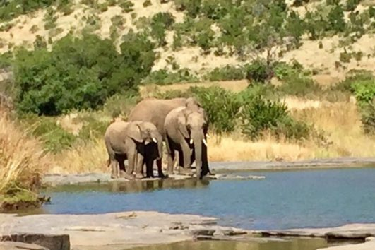 Pilanesberg Tours with South Africa Adventures_1
