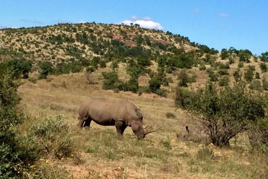Pilanesberg Tours with South Africa Adventures_13