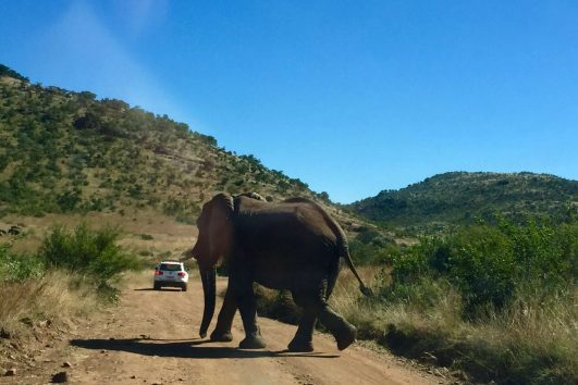 Pilanesberg Tours with South Africa Adventures_2