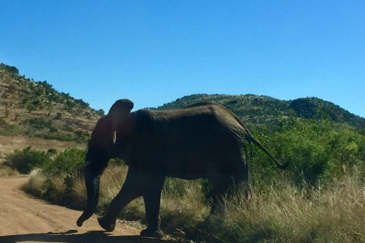Pilanesberg Tours with South Africa Adventures_5