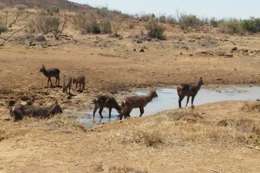 Pilanesberg nature reserve safari tours