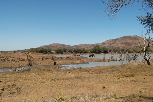 Safari day tour pilanesberg south africa