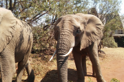Pilanesberg Safaris with Elephants