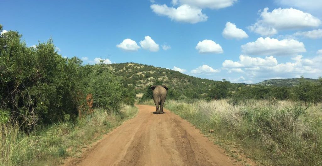 Pilanesberg safari tours_5