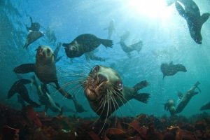 Scuba diving in South Africa with South Africa Adventures