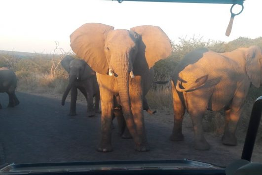 Day tours in Pilanesberg with South Africa Adventures-20