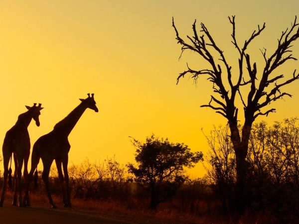 South Africa adventures tours to the kruger national park