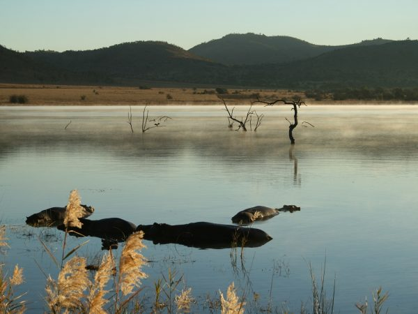 Pilanesberg park tours and adventures south africa