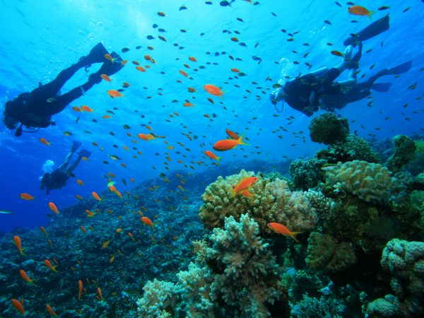 south africa scuba dive adventures