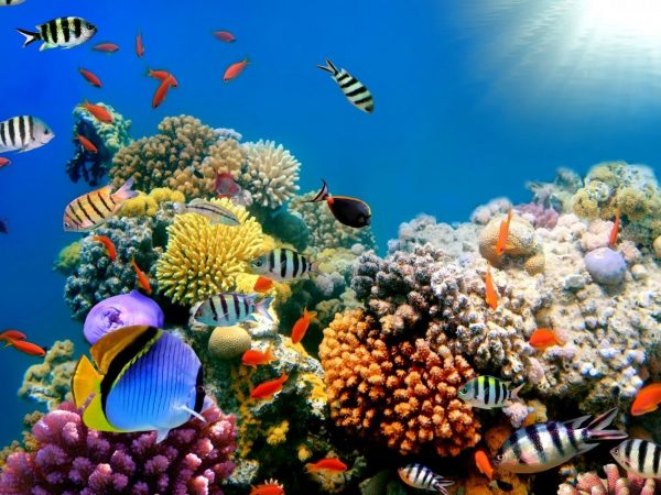 scuba-diving-adventure-tours-in-south-africa