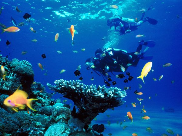 scuba-diving-tours-with-south-africa-adventures
