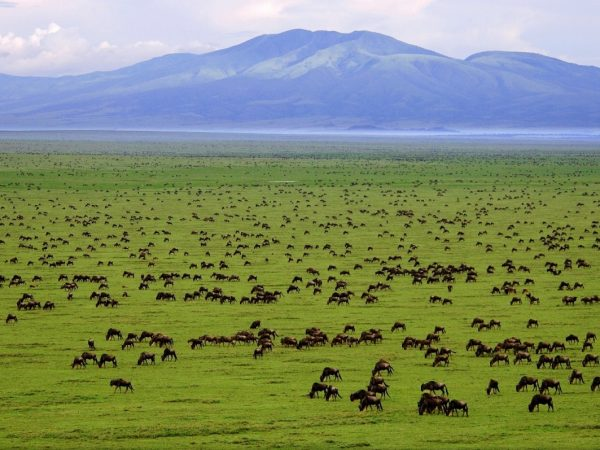 Serengeti tours and adventures