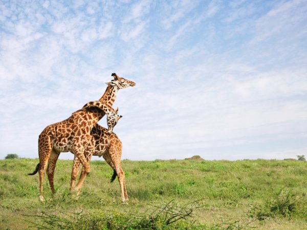 Serengeti safaris and activities