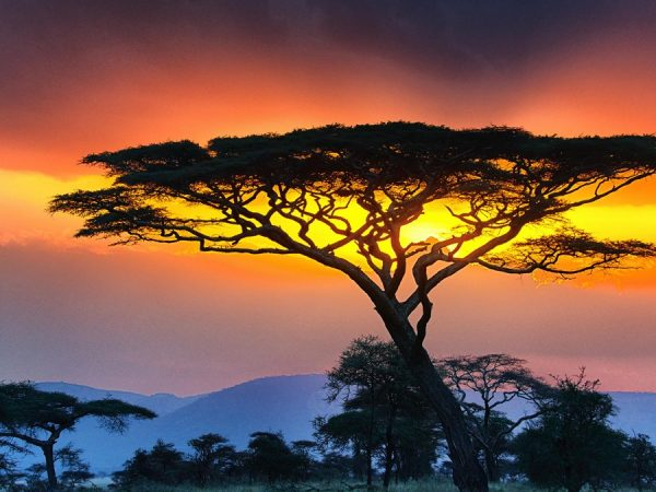 safari tours in the serengeti