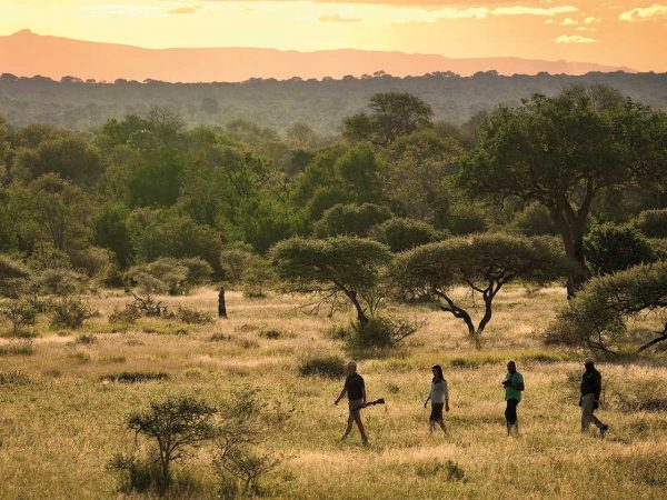 trekking Adventures on safaris