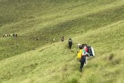 7 day Drakensberg Hike and Kruger Park Safari Combo