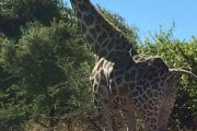 Pilanesberg Tours with South Africa Adventures_11