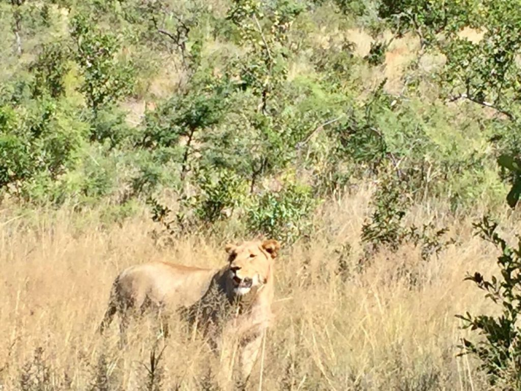 Pilanesberg Tours with South Africa Adventures_Best overnight safaris from Johannesburg