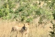 Pilanesberg Tours with South Africa Adventures_3