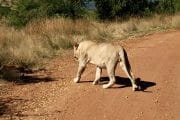 Pilanesberg Tours with South Africa Adventures_6