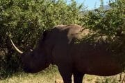 Pilanesberg Tours with South Africa Adventures_9