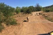 day trips to Pilanesberg game reserve'