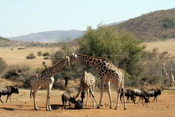 Full Day Pilanesberg Walking Safari Adventure_Best overnight safaris from Johannesburg