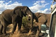 Elephant Walking safari tours with South Africa adventures