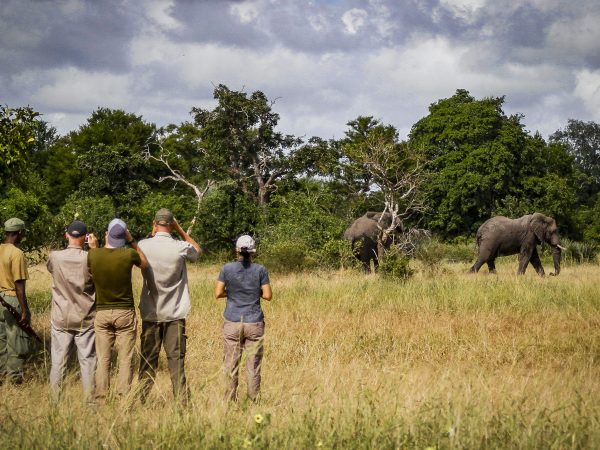 walking-safari-tours-in-south-africa