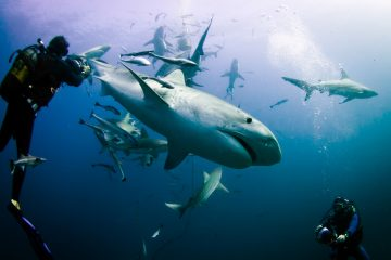 Aliwal Shoal Scuba Diving adventure tour in South Africa_Scuba diving