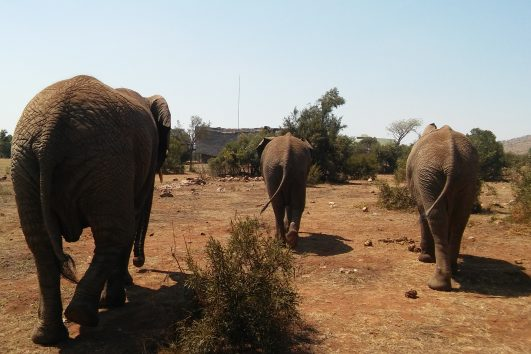 walking with elephants in south africa