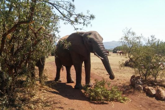 elephant walking safari tours and day tours