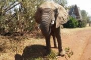 walking safari adventures and day tours south africa