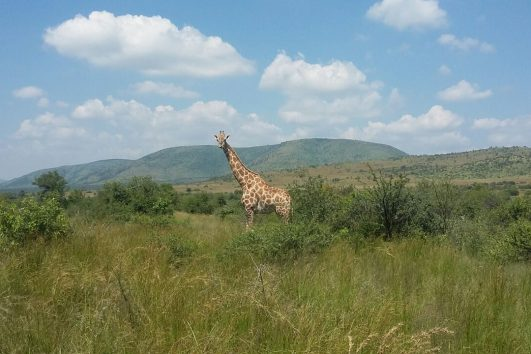 One day safaris from Johannesburg