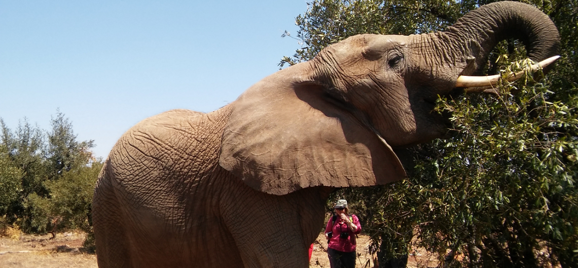 Pilanesberg day tour safari with Elephants
