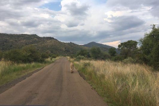 Pilanesberg safari tours_3