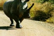 Day tours in Pilanesberg with South Africa Adventures-5
