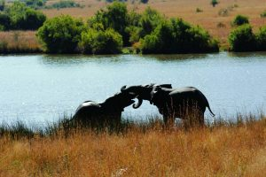 Day tours in Pilanesberg with South Africa Adventures-11