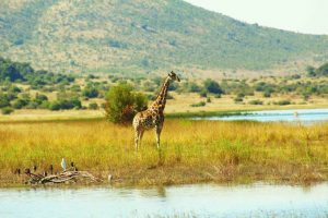 Day tours in Pilanesberg with South Africa Adventures-12