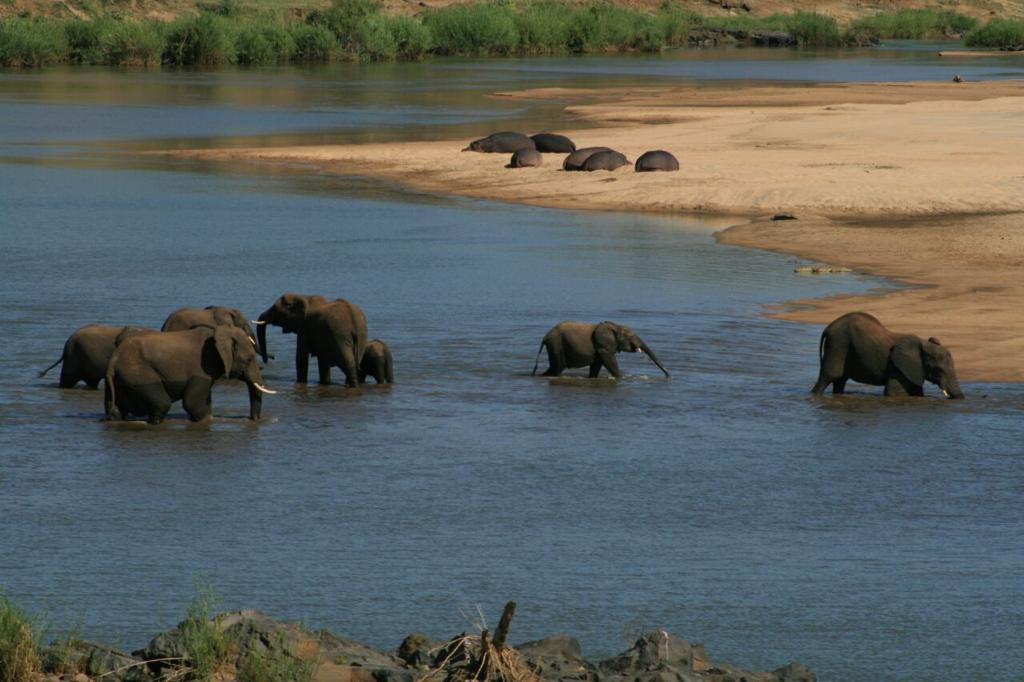 2 day Pilanesberg Safari Adventure