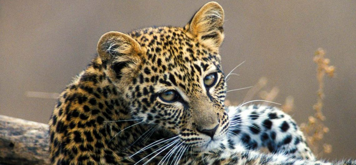 Safaris in South Africa Safari tours and adventures