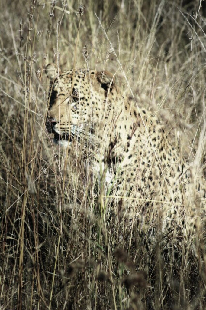 One day safaris from Johannesburg with SA Adventures