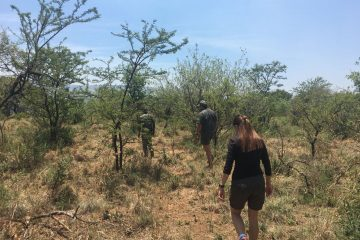 Full Day Magaliesberg Nature Hike and Elephant Interaction