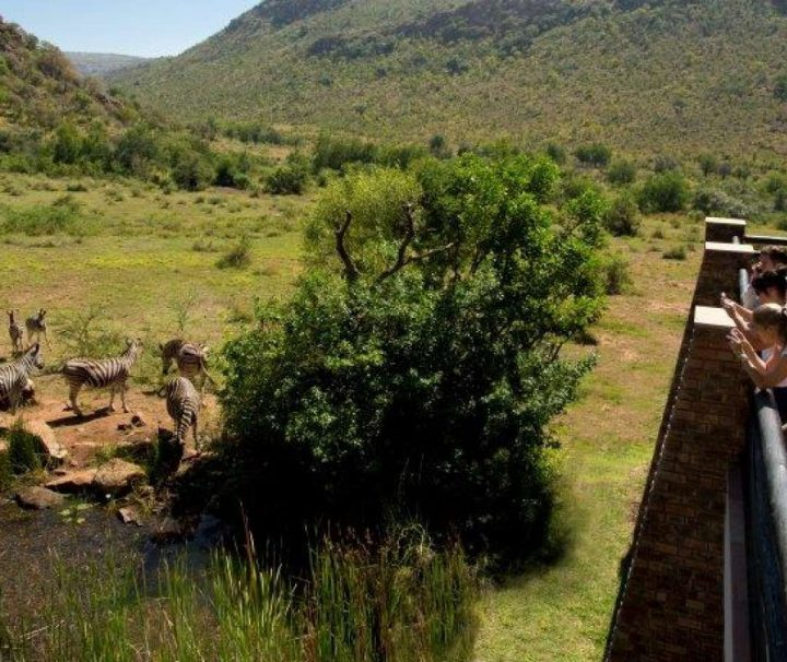 Luxury Pilanesberg Safari Tour
