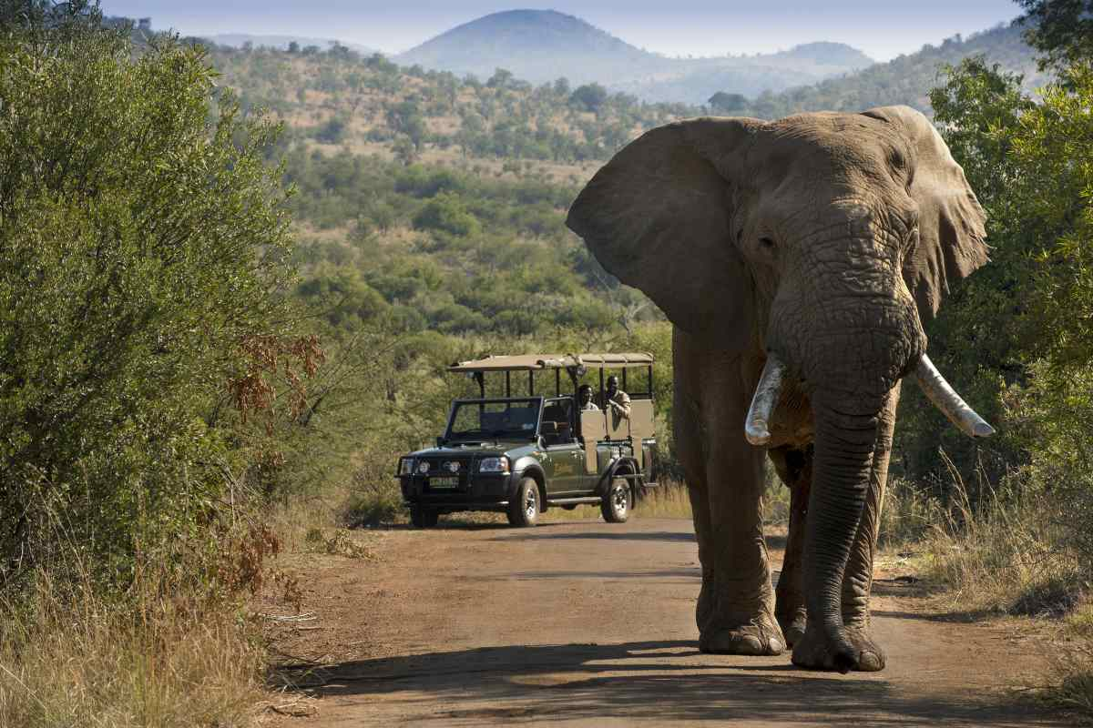 3 day Pilanesberg camping safari and Canopy Tour_Best overnight safaris from Johannesburg