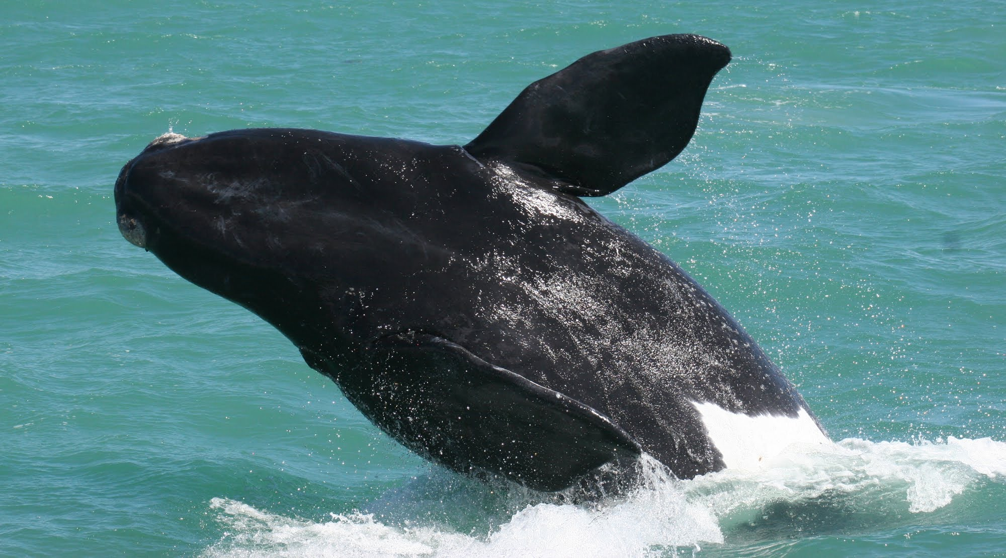 Hermanus Whale tours_1