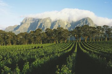 Cape Town Winelands tour